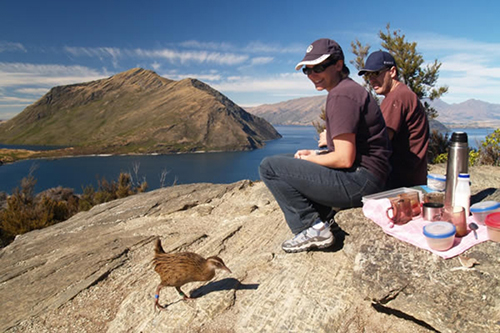 Things to do in Wanaka Eco Adventures