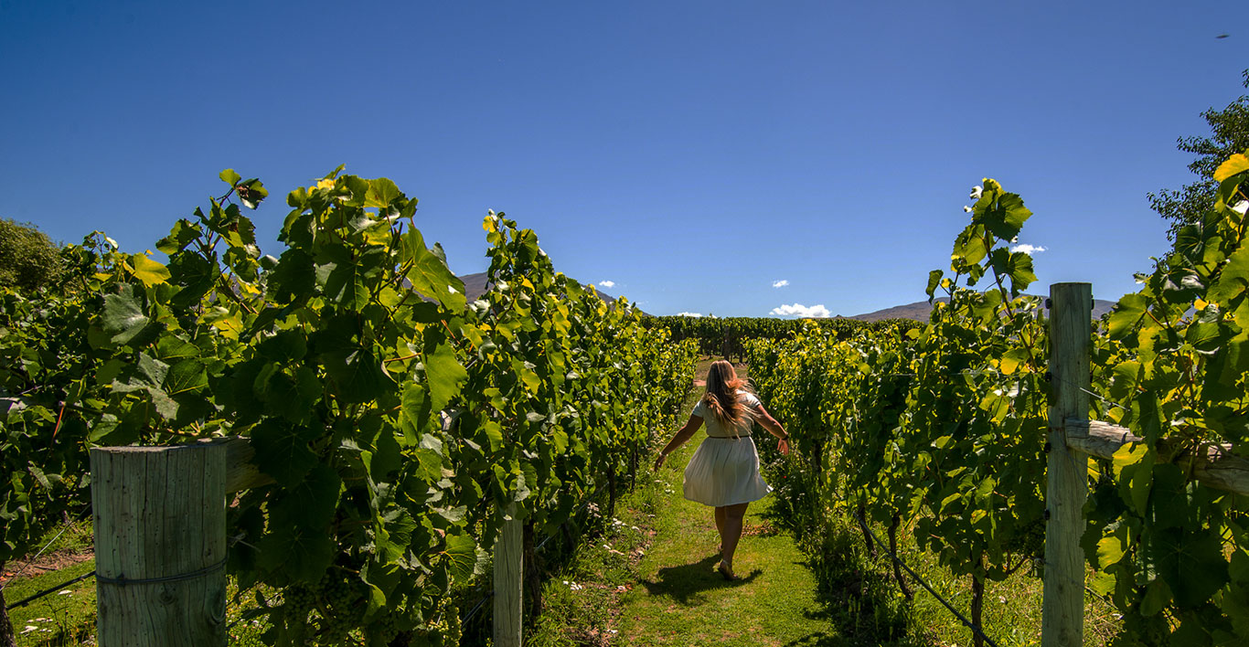 Wanaka wine tours Central Otago wine tasting