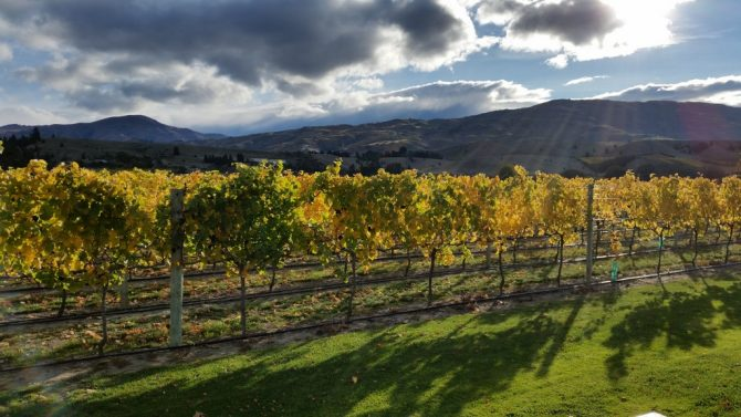 Autumn colours on a Wanaka Wine Tours