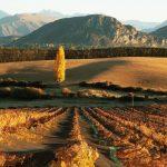 Wanaka Wine Tours in Autumn